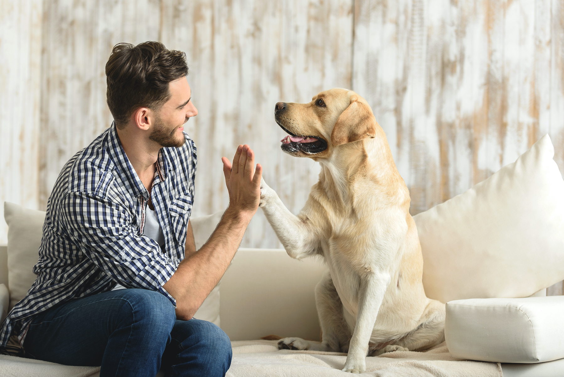 Canva - happy guy sitting on a sofa and looking at dog
