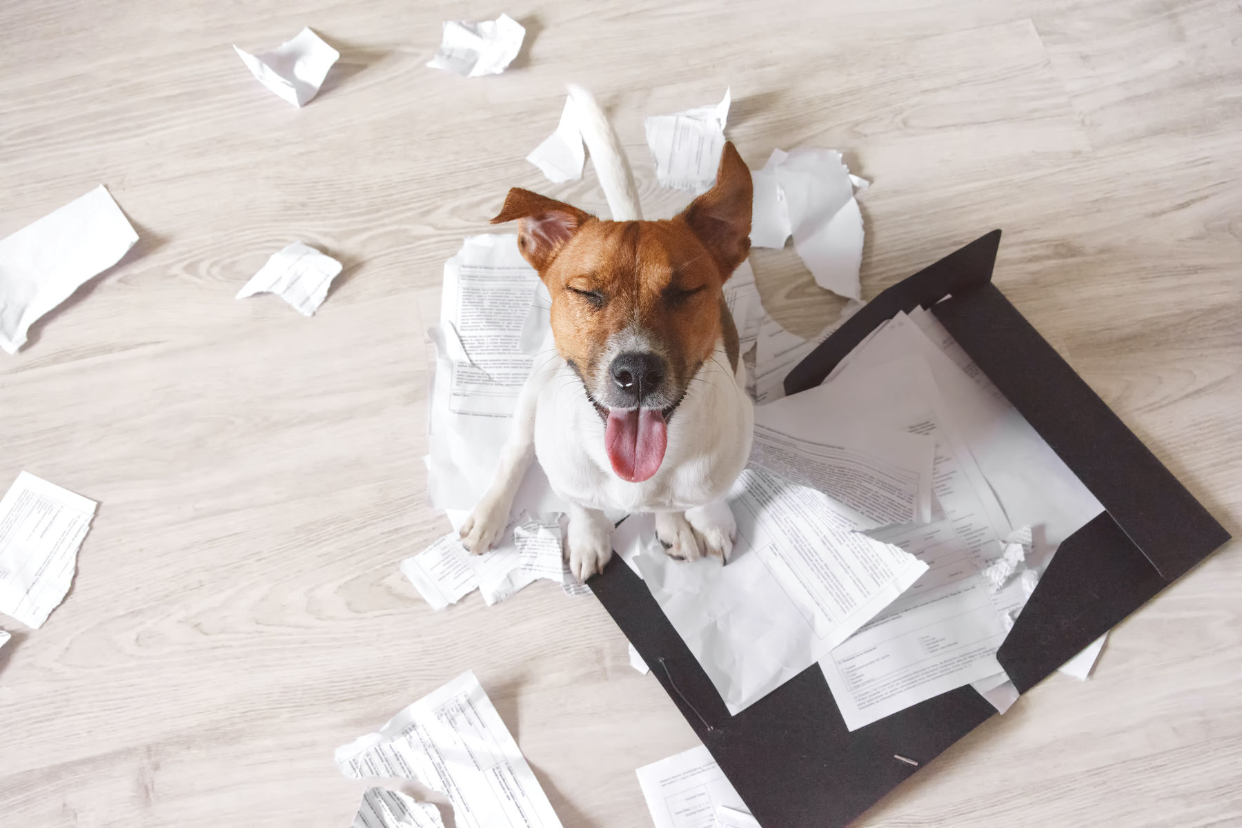Canva - Bad dog sitting on the torn pieces of documents