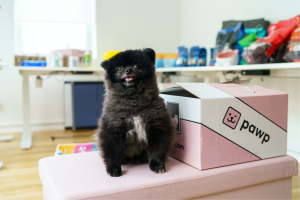 Pawp box with adorable pom dog