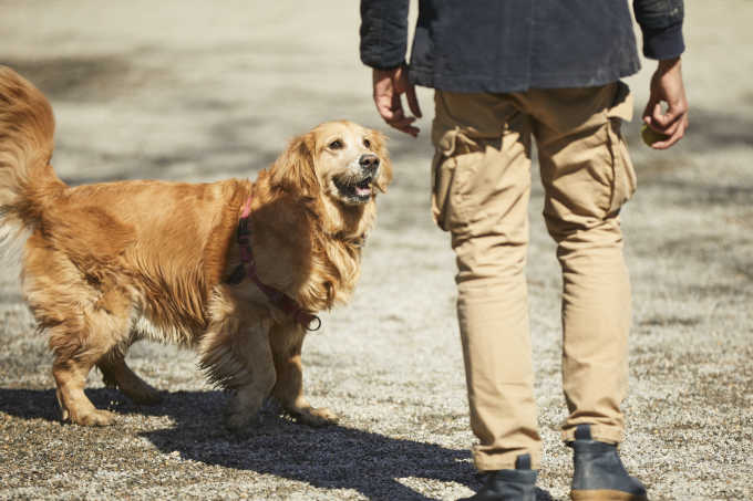 5 Things Your Dog Trainer Wishes You Knew