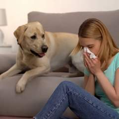 Are Hypoallergenic Dogs Real? How To Choose The Right Pet For Your Allergies