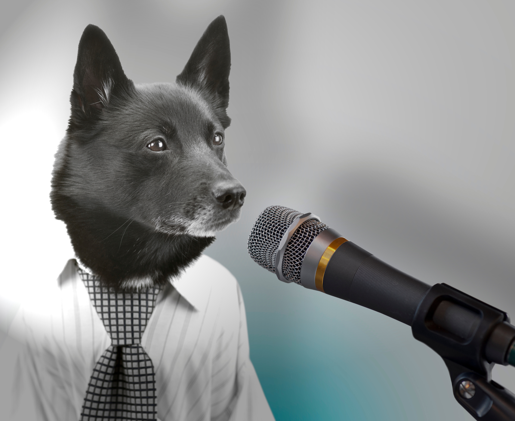 Canva - Dog as politician