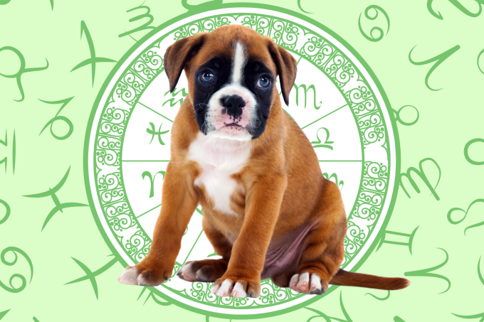 Your Dog's Weekly Horoscope 2020: March 23-29