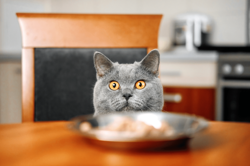 Cat Not Eating? Why Your Cat Is Refusing To Eat & How You Can Help