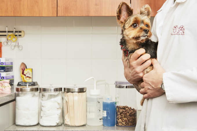 Should You Get Pet Insurance?