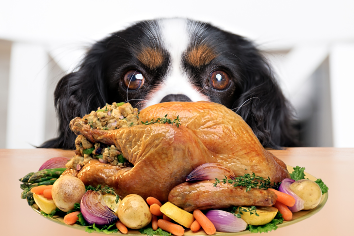 Can Dogs Eat Turkey? What Thanksgiving Foods Are Toxic To Dogs