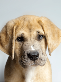 What Can I Give My Dog For Pain? Symptoms & Management