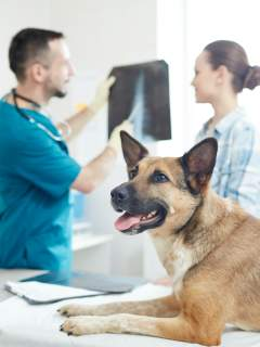 The Most Frequently Asked Questions Vets Get About Dogs, Answered
