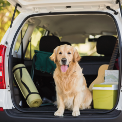 Dog Travel Checklist: What To Pack When Traveling With Your Dog