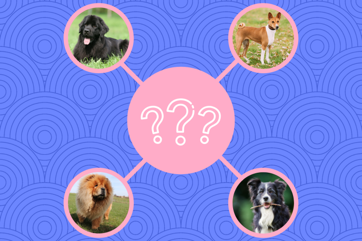 Pawp Quiz: What Dog Breed Best Fits Your Personality?