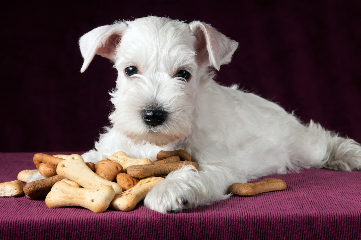 Canva - puppy with dog biscuits bones