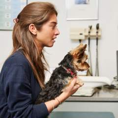 7 Things Your Vet Would Really Like To Tell You