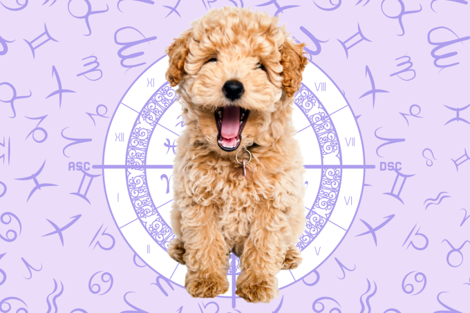Your Dog's Weekly Horoscope 2020: March 2-8