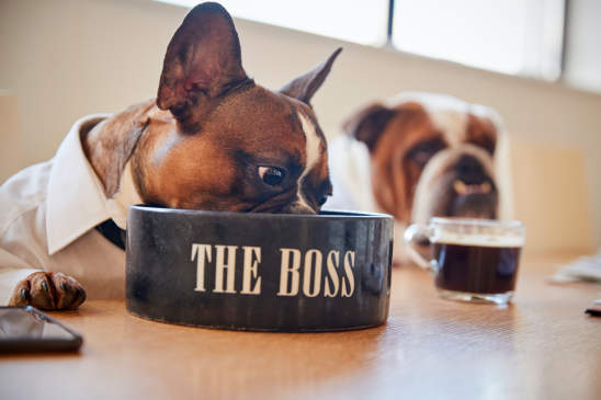 Canva - Dog Dressed as Businessmen Eating from Bowl Labelled the Boss