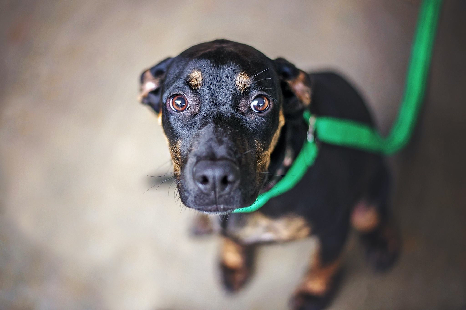 Canva - Scared Dachshund Mix in Shelter