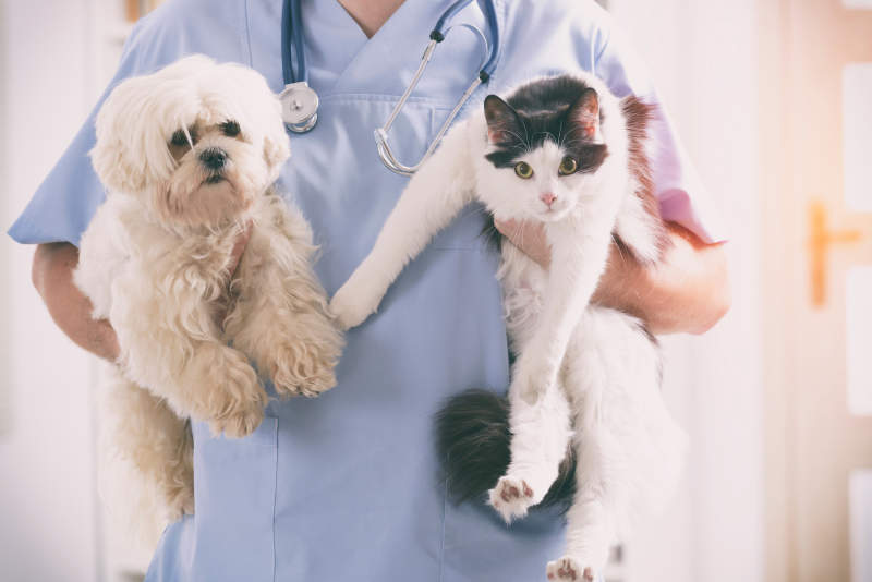The Best Pet Health Insurance Providers Of 2020 For Dogs & Cats
