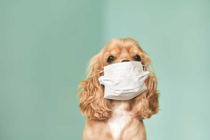 How To Protect Your Pet Against Coronavirus, According To Vets