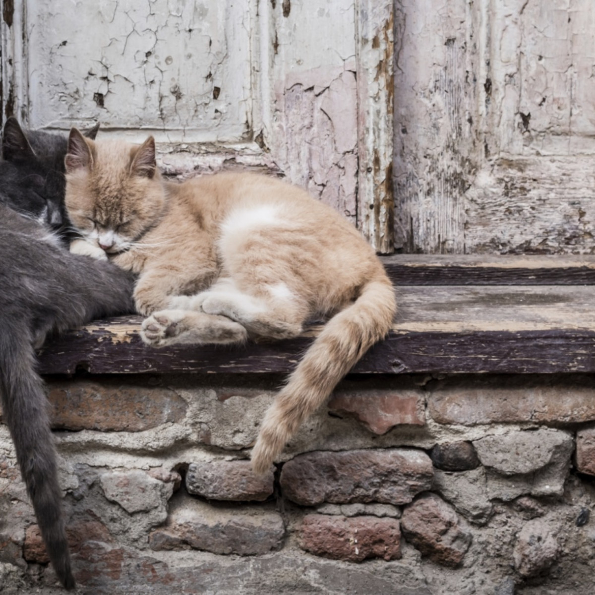 11 Facts About Animal Homelessness | DoSomething org