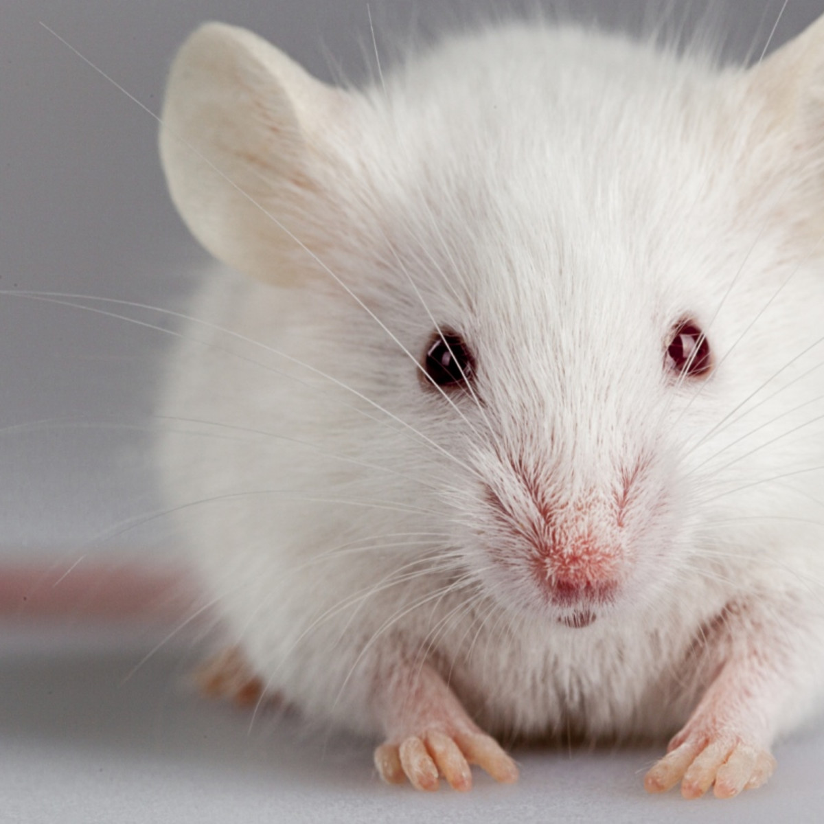 11 Facts About Animal Testing | DoSomething org