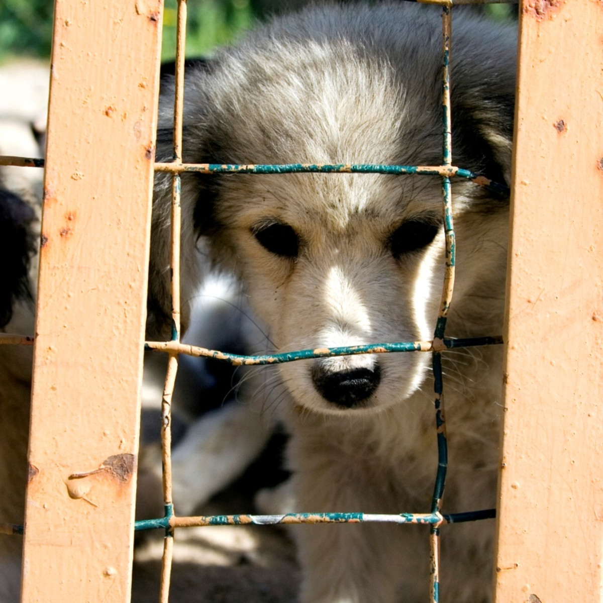 11 Facts About Puppy Mills   DoSomething org