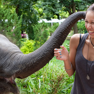 Elephant Tusk Force