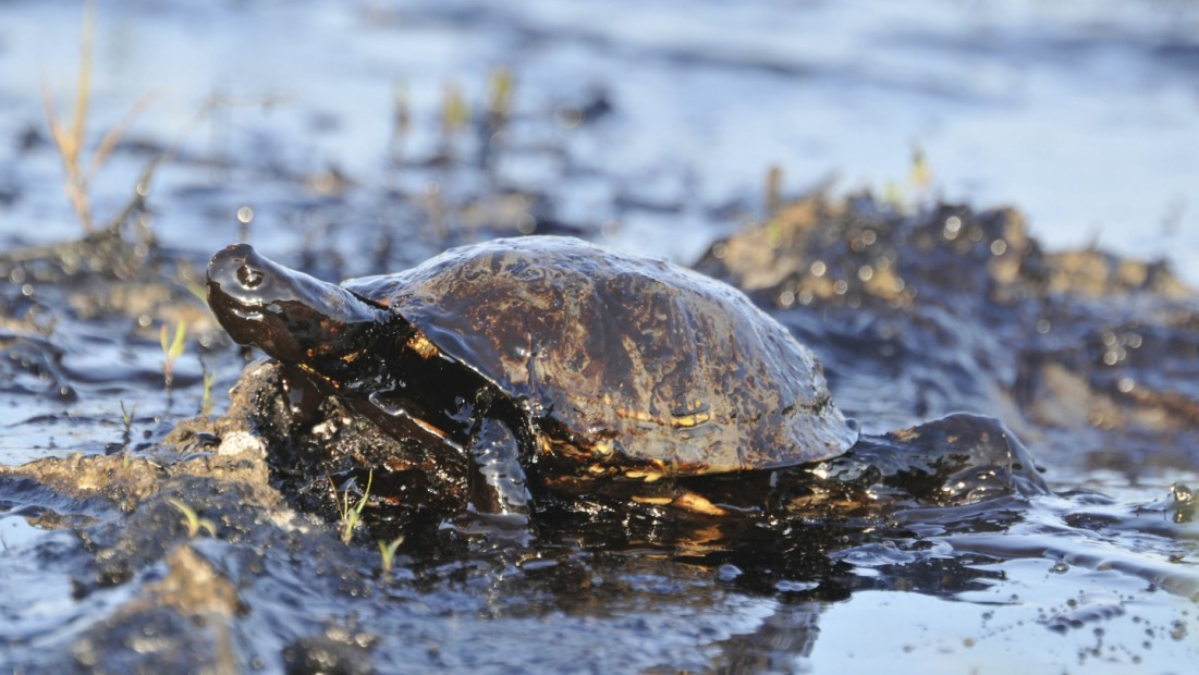 11 Facts About the BP Oil Spill | DoSomething org