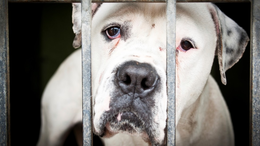 493e70f71 11 Facts About Animal Cruelty | DoSomething.org