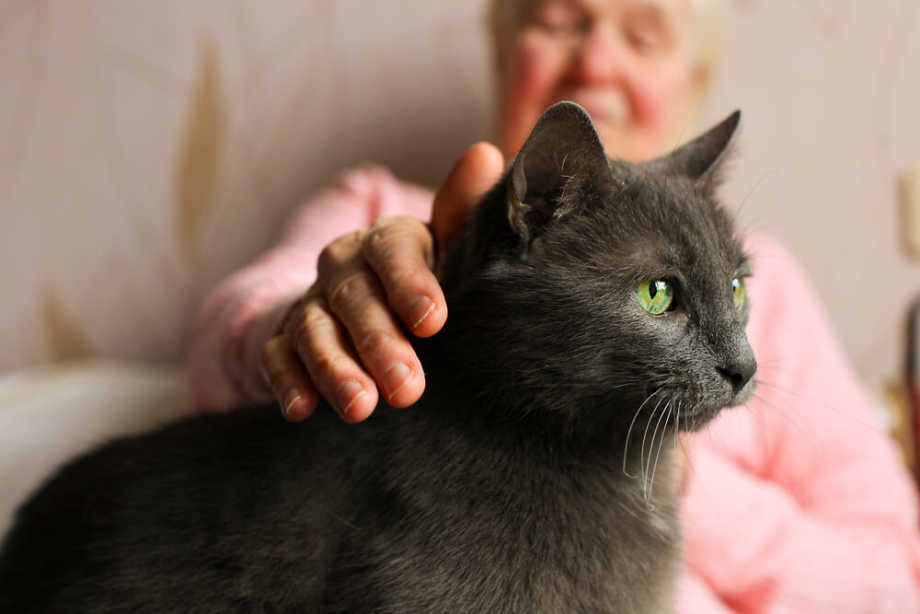 Old Woman Petting Cat