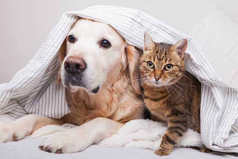 Dog and cat sharing a blanket