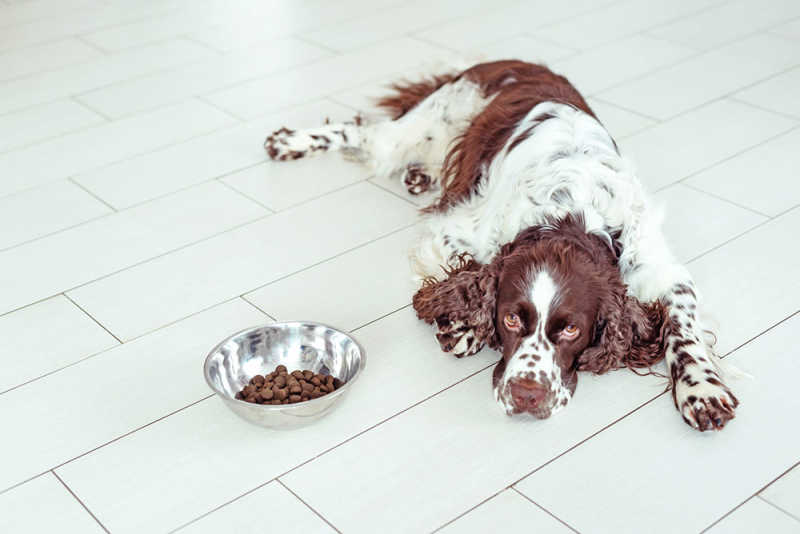 Dog laying next to food bowl