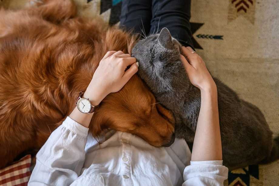Cat and dog laying on woman's lap