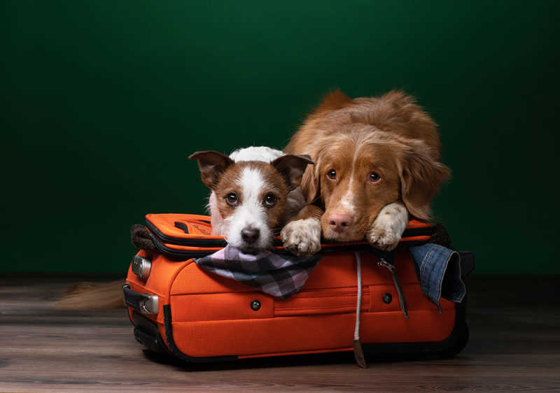 Two dogs laying on suitcase together