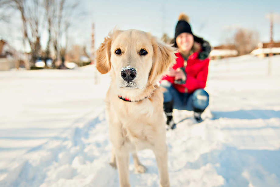 Dog and owner in snow