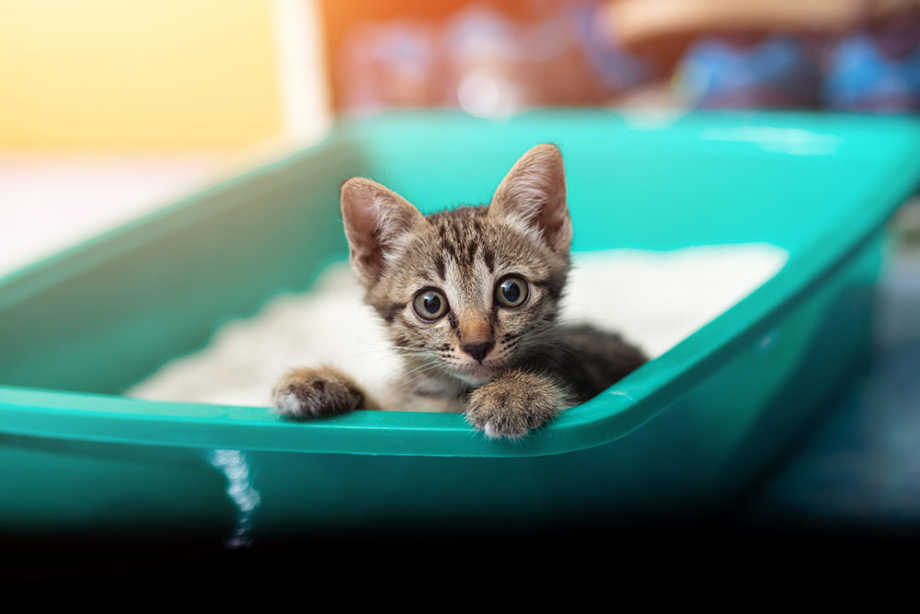 Kittne in litter box