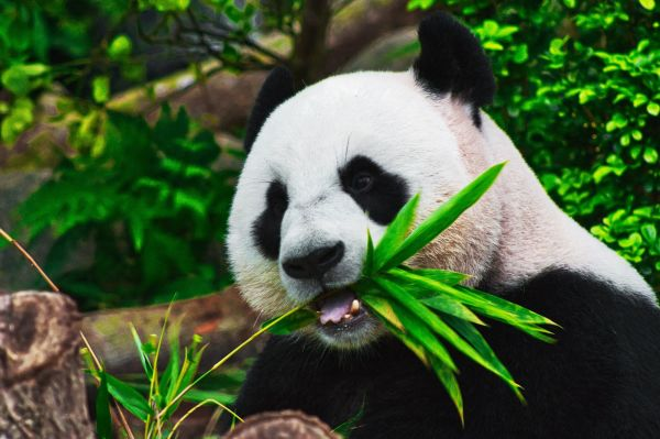 'Making tissue from bamboo? I never would have come up with that'