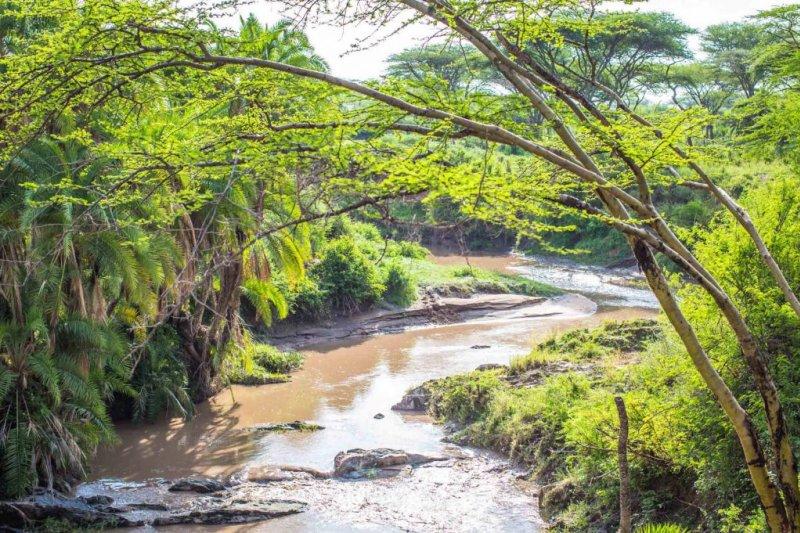 Trees-near-river-in-serengeti