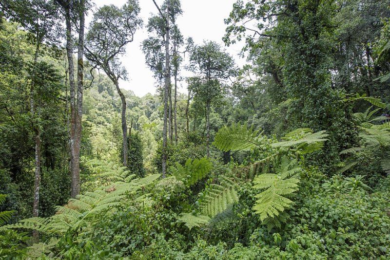 Forest Bwindi Impenetrable National Park