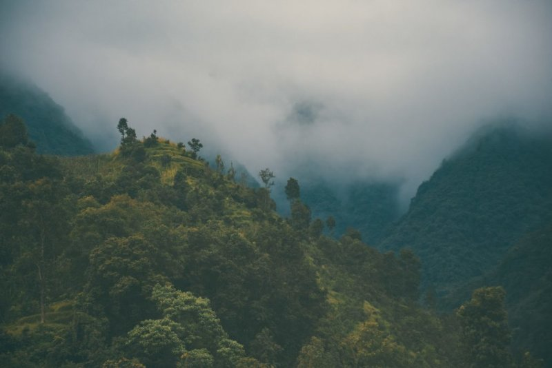 Annapurna trek route forest