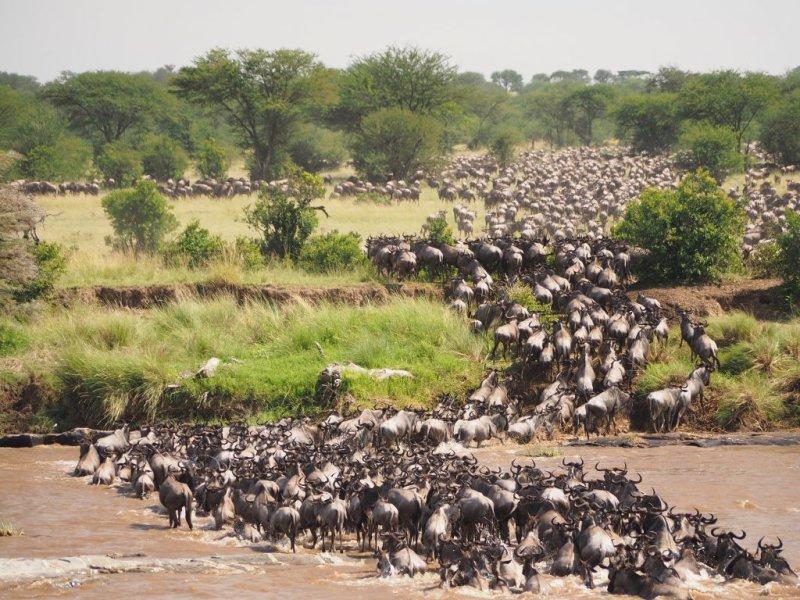Great Migration river crossings Serengeti National Park