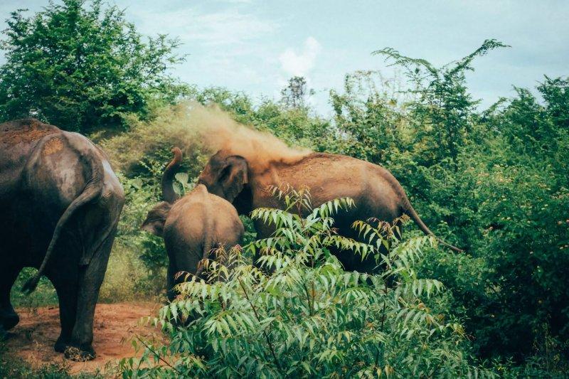 Sri Lanka elephants Udawalawe Park
