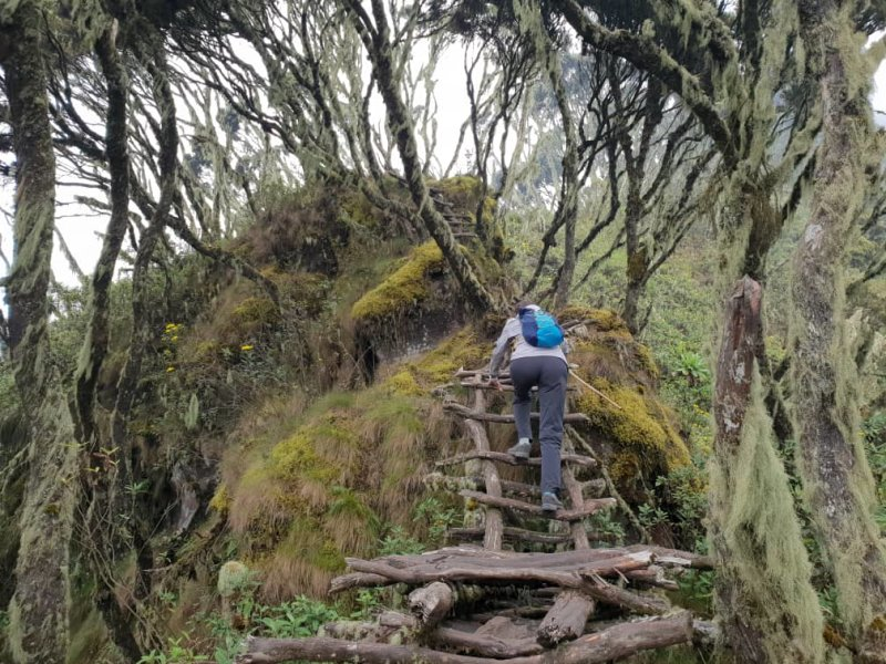 hiker climbing up a wooden ladder in the Rwenzori mountains of Uganda