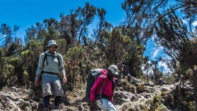 Two trekkers hiking downhill on rough terrain on Kilimanjaro in the moorland zone