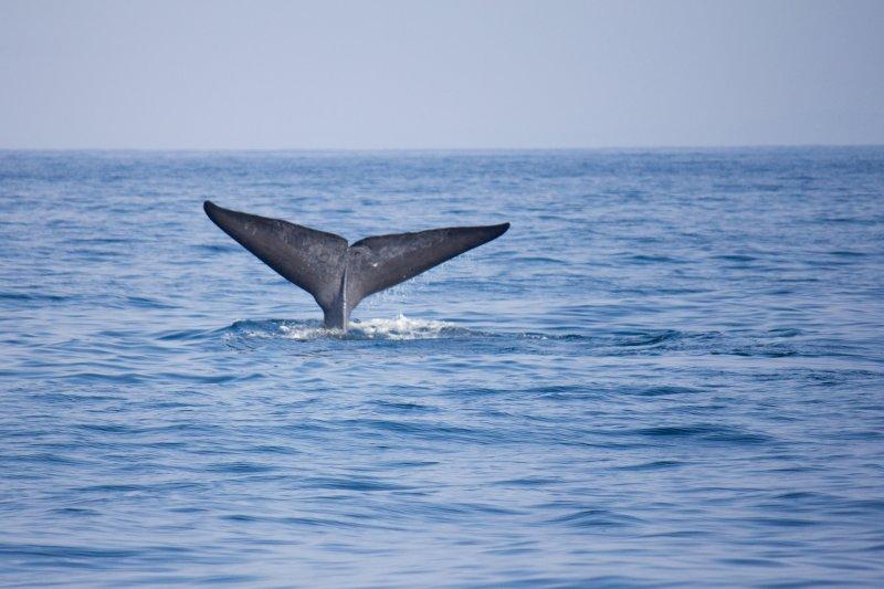 Spotting whales in Mirissa, Sri Lanka