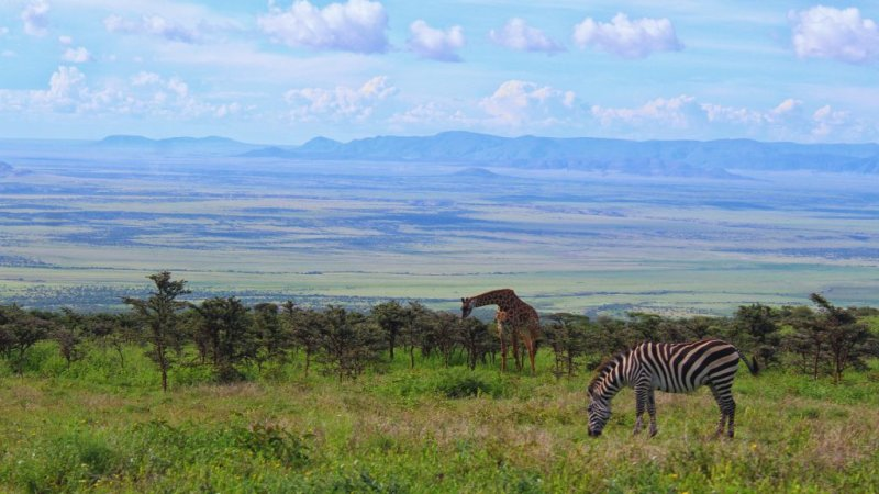 Giraffe and zebra, what is the Serengeti famous for?
