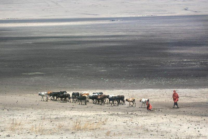Maasai cattle herder in Serengeti