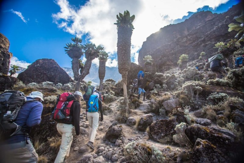 Climbers walking up the trail among succulents and rocks on Kilimanjaro
