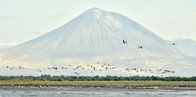 Mt Ol Doinyo Lengai soars above Lake Natron and its countless water birds