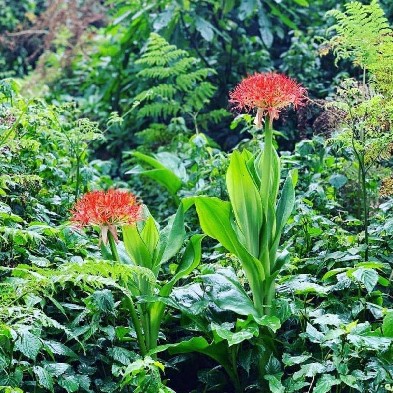 flowers Kilimanjaro forest