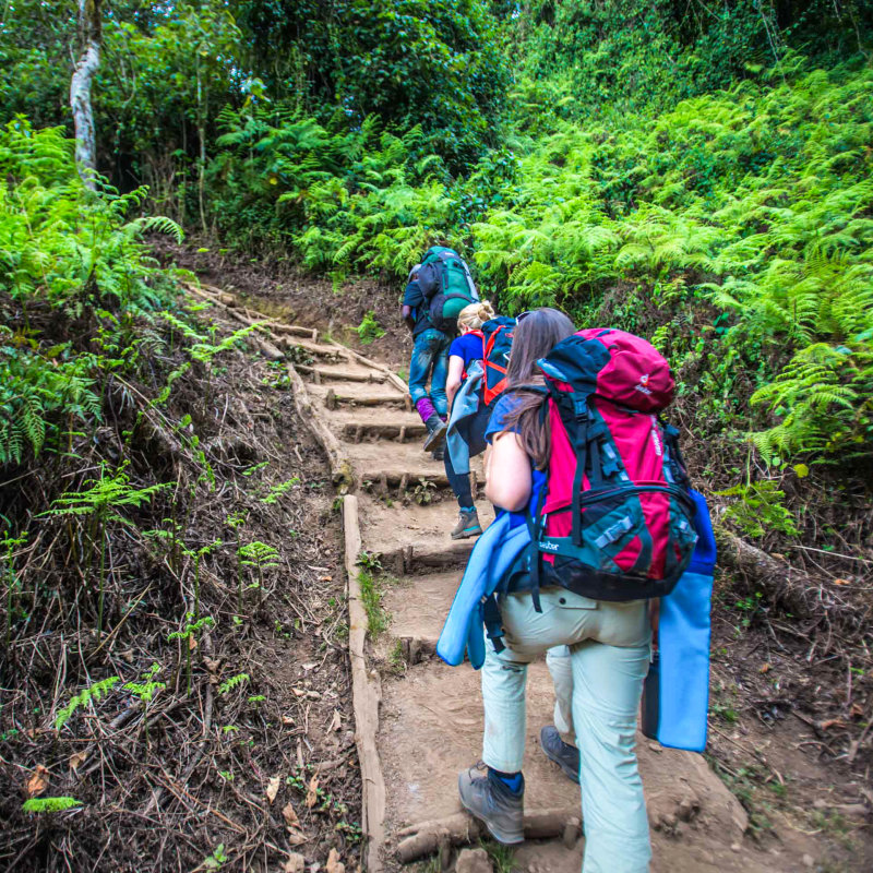 Trekkers climbing up steep path in the forest of Kilimanjaro
