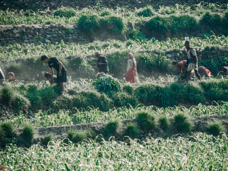 Nepal Farming in annapurna Circuit